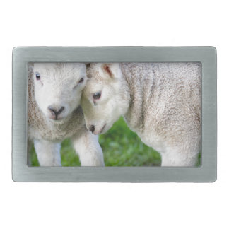 Two hugging and loving white lambs rectangular belt buckle