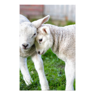 Two hugging and loving white lambs stationery