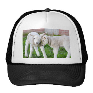 Two hugging and loving white lambs trucker hat