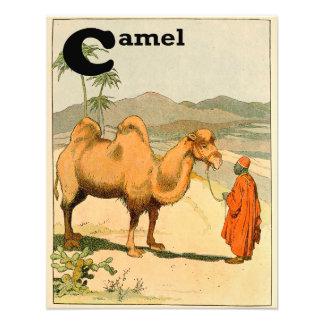 Two-hump Camel Alphabet Animal Photo Print