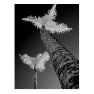 Two infrared palm trees. postcard