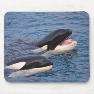 Two killer whales mouse pad