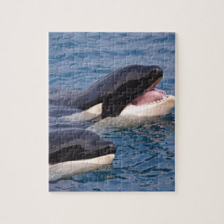 Two killer whales puzzle