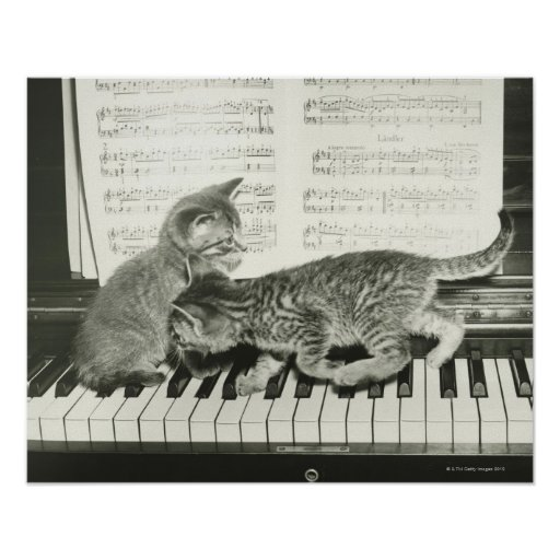 Two kitten playing on piano keyboard, (B&W) Poster
