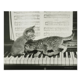 Two kitten playing on piano keyboard B W Posters