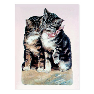 two kittens cats cute love adorable loving pets postcard