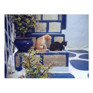 Two Kittens Enjoying the Day Postcard