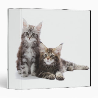 Two kittens of Maine coon cat 3 Ring Binders