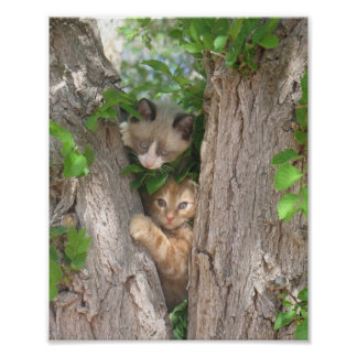 Two Kittens on a Tree Poster