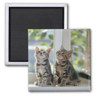 Two Kitties Magnet