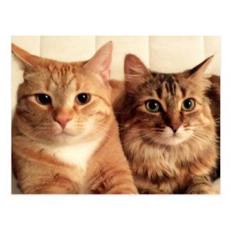 Two kitties postcard