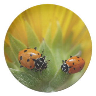 Two Lady Bugs on a Sunflower Melamine Plate