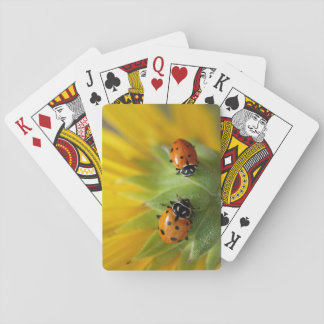 Two Lady Bugs on a Sunflower Playing Cards