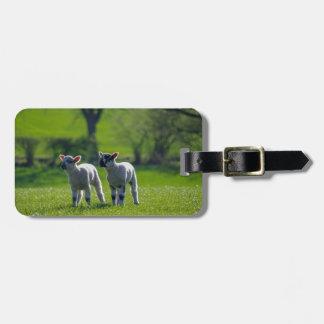 Two lambs luggage tag