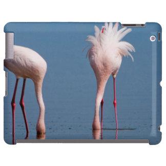 Two Lesser Flamingos (Phoenicopterus Minor) Feed