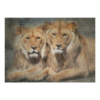 Two Lion Friends Poster