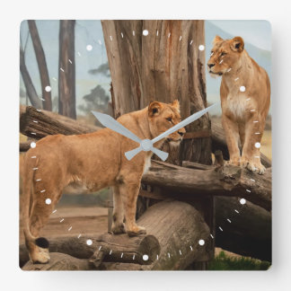 Two Lioness Lions Square Wall Clock