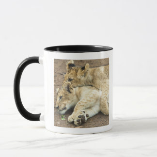 Two lions cubs playing. mug