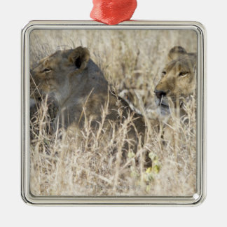 Two lions hidden in dry grass, Kruger National Metal Ornament