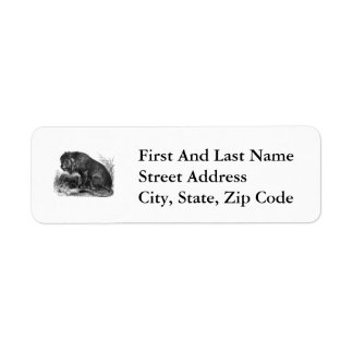 Two Lions in the Wilderness Return Address Label