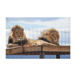 Two lions on a scaffold canvas print