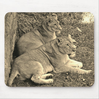 Two Lions Resting 2 - Mouse Pad