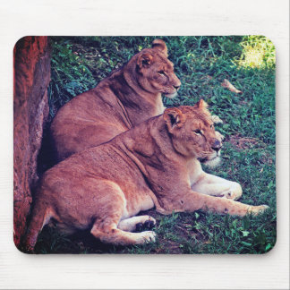 Two Lions Resting - Mouse Pad