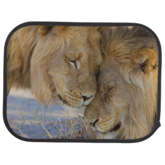 Two Lions rubbing each other Auto Mat