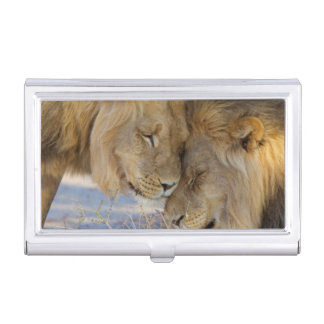 Two Lions rubbing each other Case For Business Cards