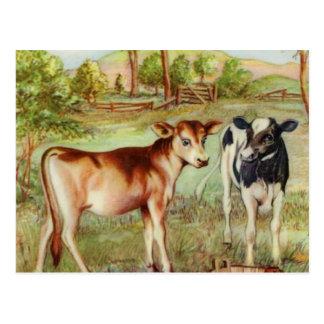Two Little Calves Postcard