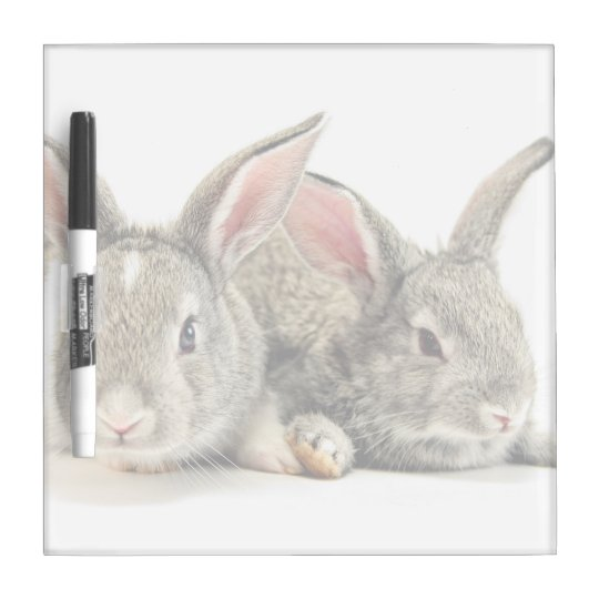 Two little cute Rabbits Dry-Erase Whiteboards