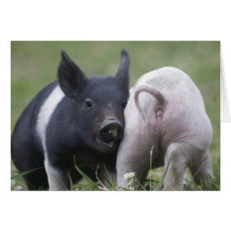 Two Little Pigs; Piglets - Cute Funny Baby Animals Card