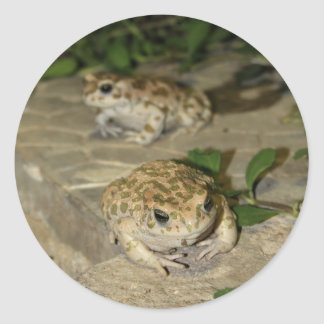Two little toads - green frog print classic round sticker
