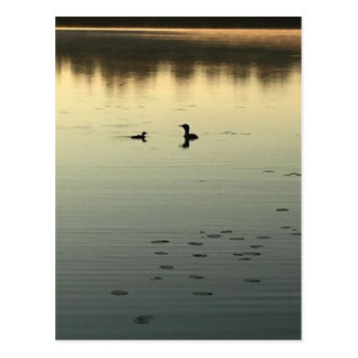 Two loons postcard