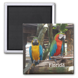 two macaw or parrots square magnet
