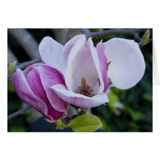 """Two Magnolias, Open and Shut"" Card"