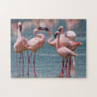 Two Male Lesser Flamingos (Phoenicopterus Minor) Jigsaw Puzzle