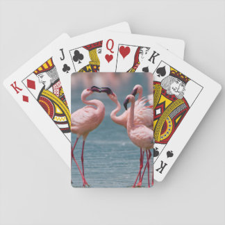 Two Male Lesser Flamingos (Phoenicopterus Minor) Playing Cards
