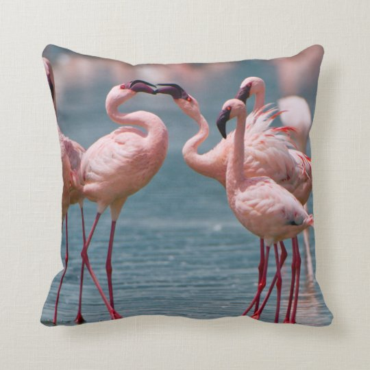 Two Male Lesser Flamingos (Phoenicopterus Minor) Throw Pillow