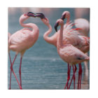 Two Male Lesser Flamingos (Phoenicopterus Minor) Tile