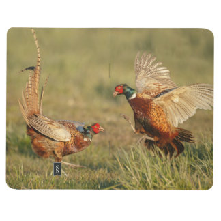 Two male ring-neck pheasants fighting. journals