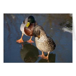 Two Mallard Ducks Greeting Card
