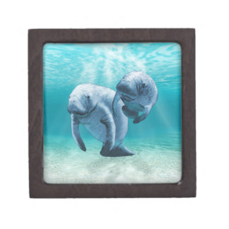 Two Manatees Swimming Premium Gift Box