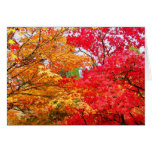 Two Maples in Autumn Note Card