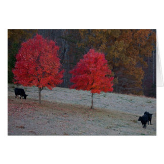two maples three cows card