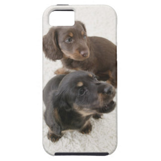 Two Miniature Dachshunds, Studio Shot iPhone 5 Cover