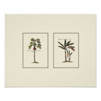 Two Miniature Framed Palm Trees Poster
