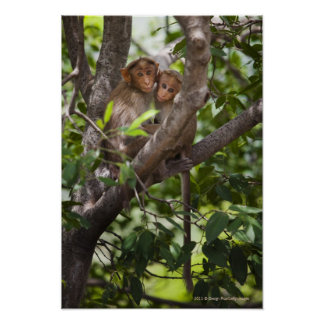 Two Monkeys In A Tree Poster