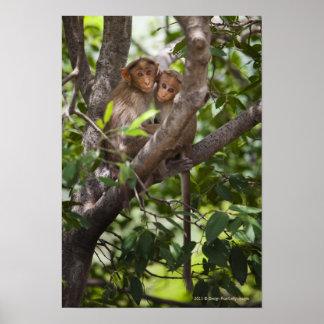 Two Monkeys In A Tree Poster