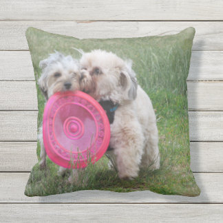 Two morkies playing with frisbee pillow